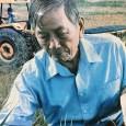 Rendirán homenaje a quien fue considerado el padre del arroz dominicano