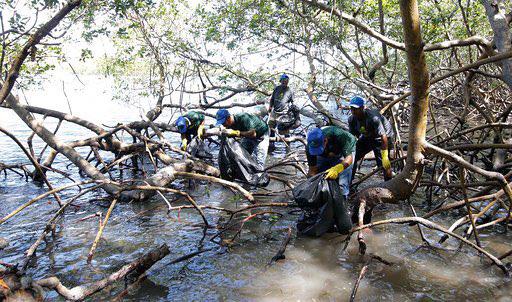 Realizan jornada preservación manglares Luperón
