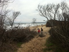 We found the track to the beach - the trick in the Maze is 'listen for the sea'.