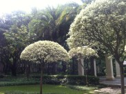 Outside our block, some sculpted trees