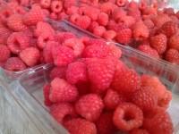 Gómez Farías exportador de berries
