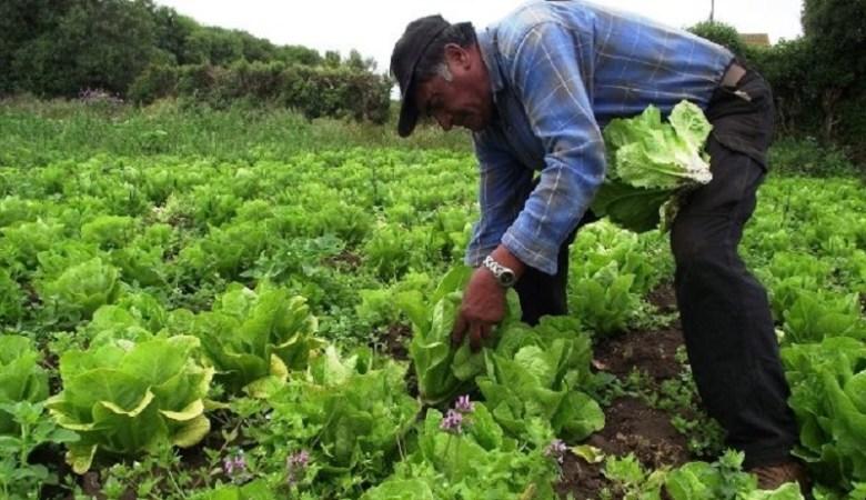 Agricultor. Extraída de: www.cnc.org.mx.jpg