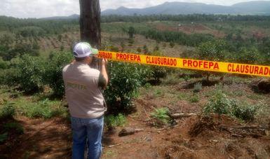 PROFEPA clausura plantíos de aguacate en el sur de Jalisco