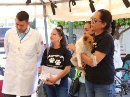 Arranca campaña de esterilización de mascotas en Zapotlán