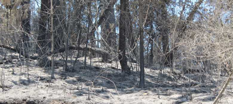 Bomberos logran sofocar incendio en Gómez Farías