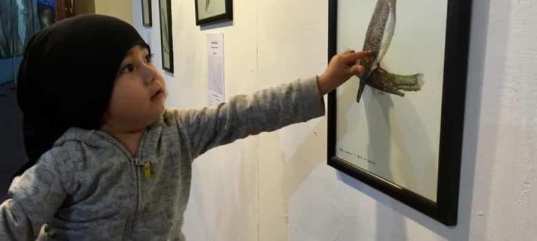 Presentan exposición de dibujos científicos sobre aves del Nevado de Colima en Peligro de Desaparición