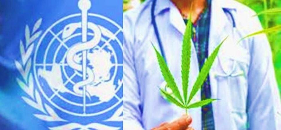 ONU reconoce las propiedades medicinales del cannabis