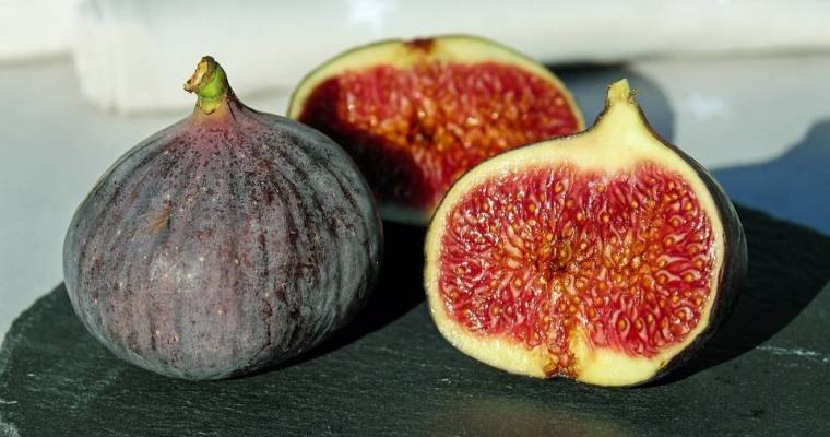The Ancient Fruit: Fig Magical Properties and Uses — Magical Herbs