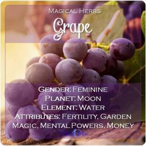 Grape Magical Meaning | Grape Magical Properties | Magical Herbs - Elune Blue