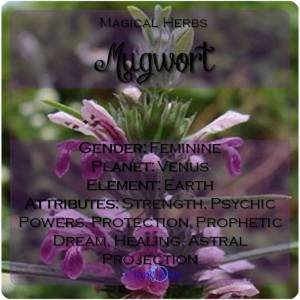 Mugwort Magical Meaning | Mugwort Magical Properties | Magical Herbs - Elune Blue