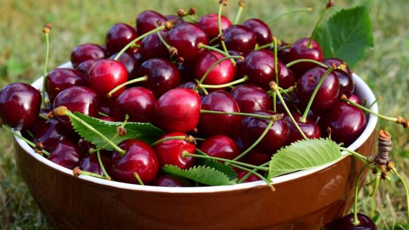 As ancient Chinese lore recounts, the Goddess Xi Wang Mu had a beloved garden full of the cherries of immortality which would ripen every thousand years. -- Cherry Symbolism and Meaning