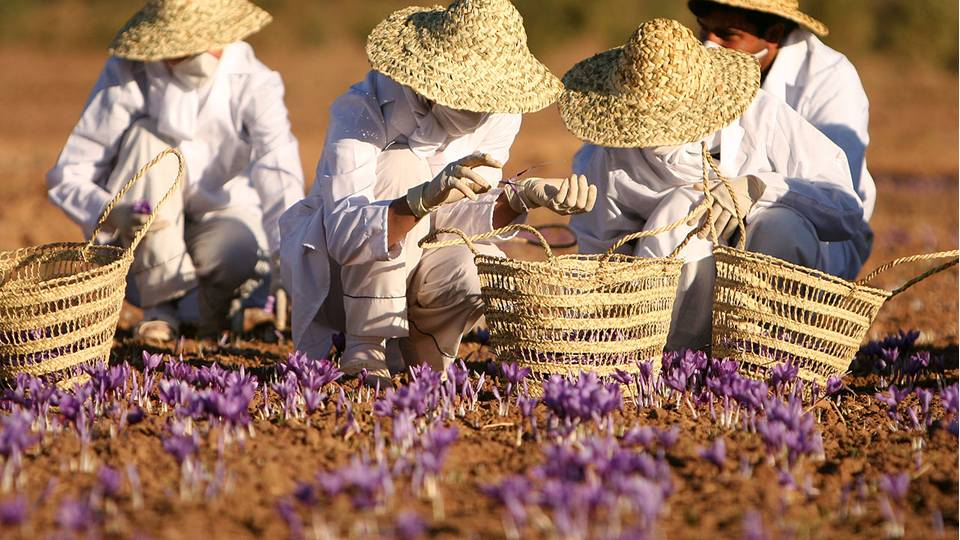 """The Persians would use saffron to """"raise the wind,"""" as wind power was quite important to Persian culture and was used to moderate the temperature in their homes and storehouses. -- Saffron Magical Properties and Uses"""