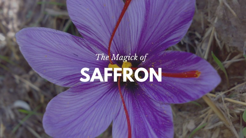 Saffron is irresistibly tantalizing drawing us in with its sultry, provoking aroma and passionate, seductive energy. -- Saffron Magical Properties and Uses