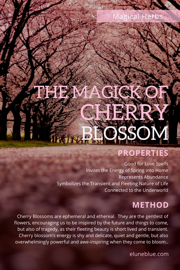 Cherry Blossoms are ephemeral and ethereal. They are the gentlest of flowers, encouraging us to be inspired by the future and things to come, but also of tragedy, as their fleeting beauty is short loved and transient. -- The Magick of Cherry Blossoms