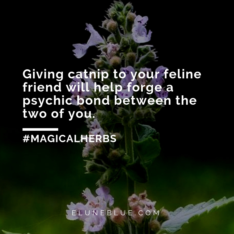 Giving catnip to your feline friend will help forge a psychic bond between the two of you. -- Catnip Magical Properties and Uses