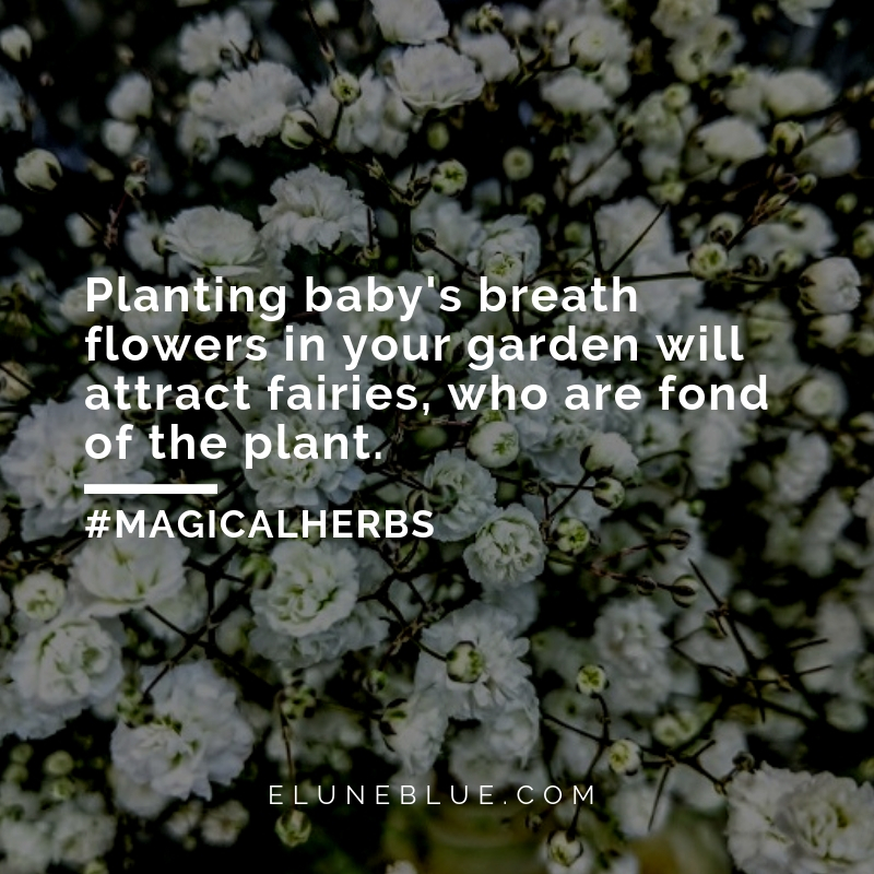 Planting baby's breath in your garden will attract fairies, who are fond of the plant. -- Baby's Breath Magical Properties and Uses