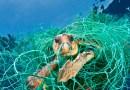 Animales de la región mueren por confundir basura con alimento