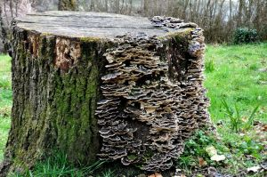 Fungus_in_a_Wood