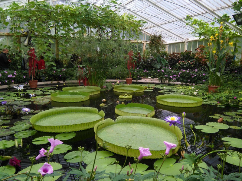 waterlily-house-en-kew-gardens