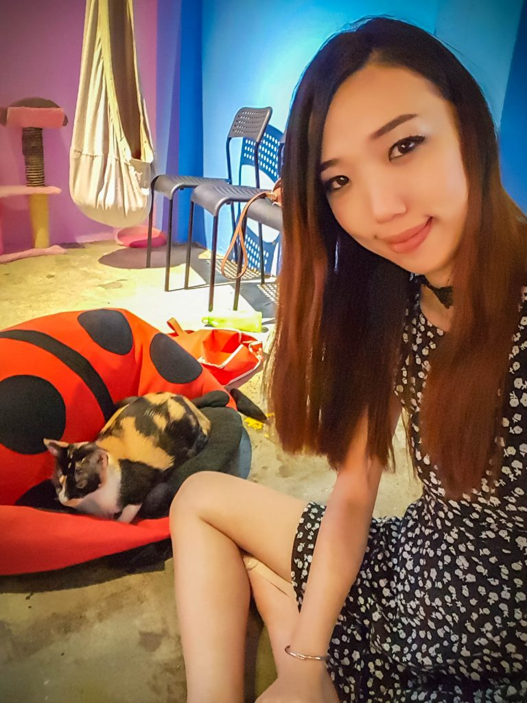 Cat Cafe in Malaysia