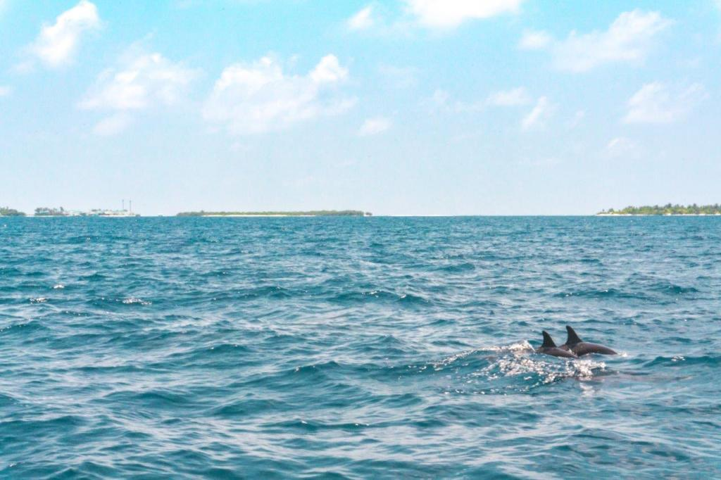 maldives tourism maldives vacation packages tour in maldives