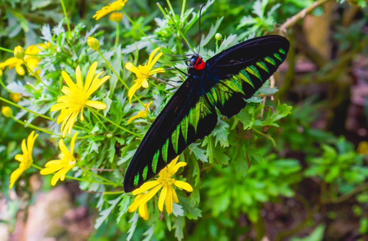 butterfly garden cameron highlands
