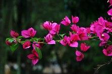 flower4web