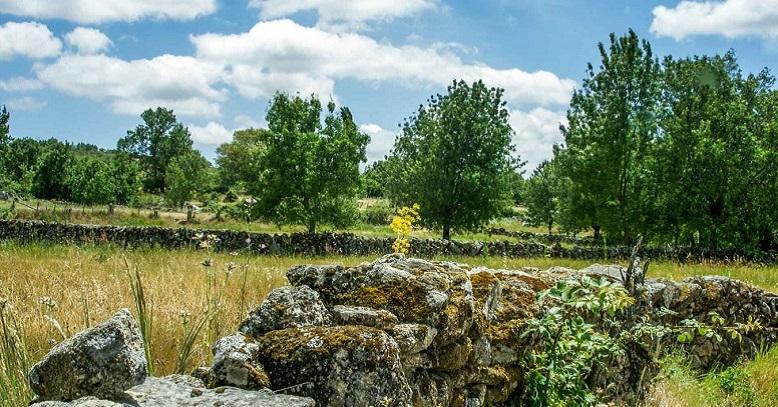 Paseos por el entorno de Pinedas, en plena naturaleza