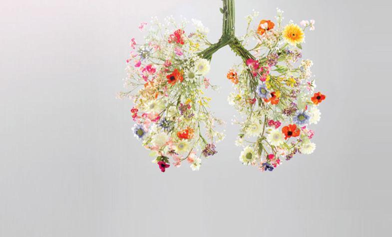 nueva funcion pulmones