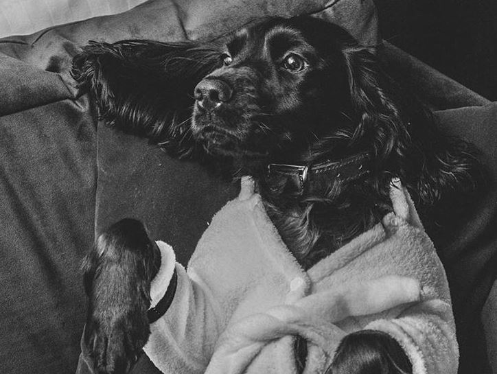 spa para perros