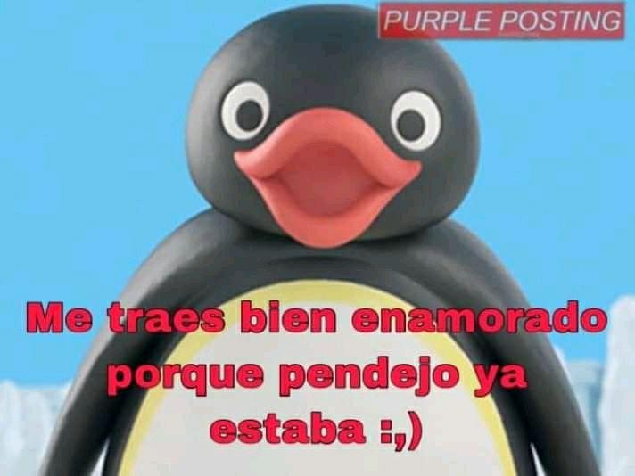 Memes Del Pingu Faiv Wattpad