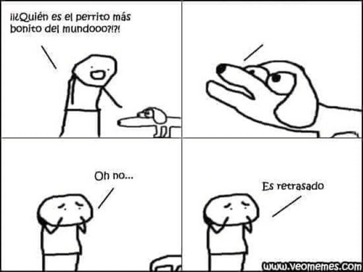 El Meme Viral Protagonizado Por Dos Perros Que Compara La Vida De