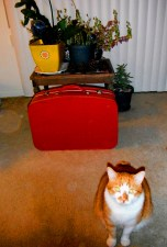 love the little red suitcase (and Timi the cat)