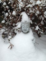 snowy buddah with the rosemary plant