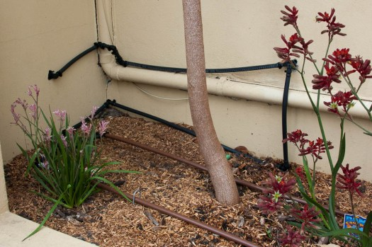 13mm poly pipes run along wall and on garden bed