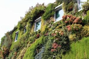 green walls' width=