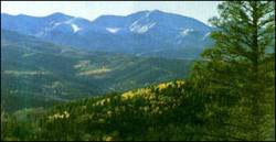 Colorado has no state law regulating the taking of trees in private forests. Photo: Ancient Forest Rescue