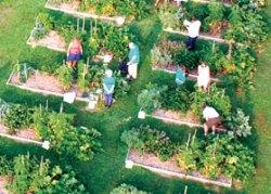 fresh food © Grow Food, Grow