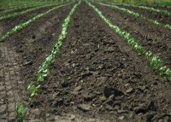 nano-pesticides' width=