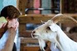 © Woodstock Farm Animal Sanctuary