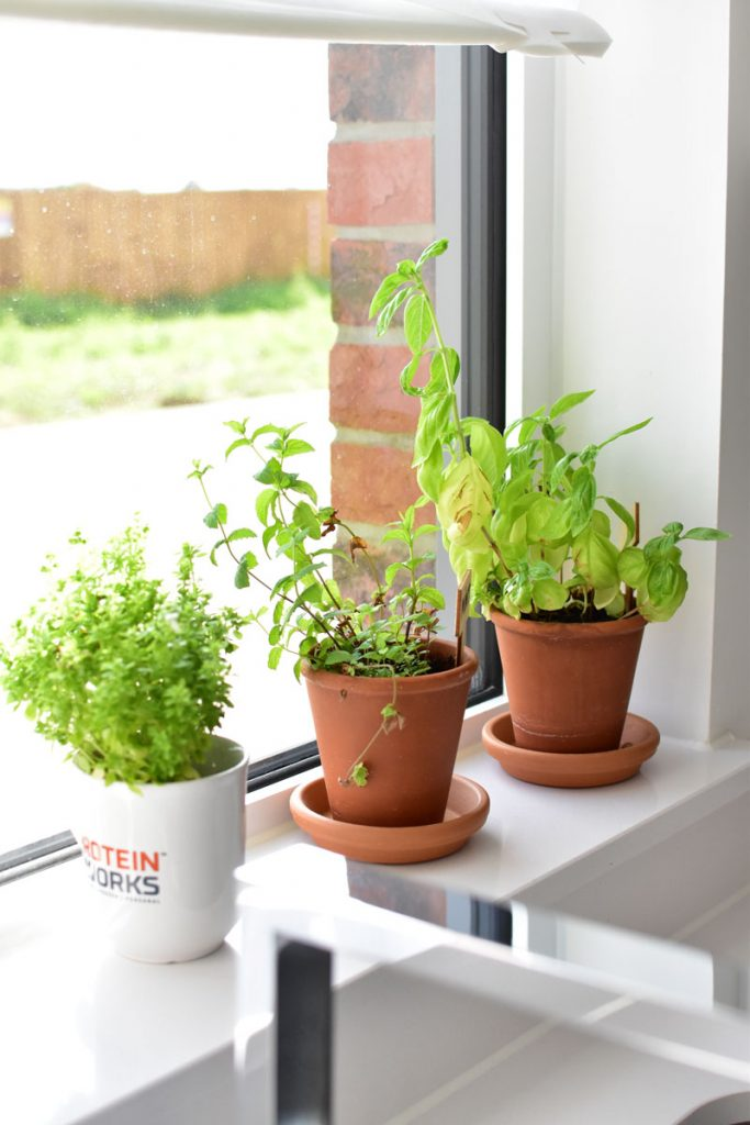 ervas aromáticas na cozinha