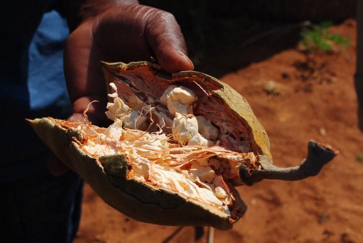 Fruta Baobá superfood