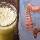 Elimine as toxinas, limpe seu intestino e perca até 4kg por semana