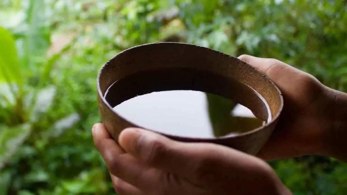 Guayusa, o Chá para baixar Diabetes da Amazônia