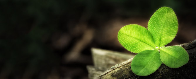Four-leaf clover sitting on stack of wood