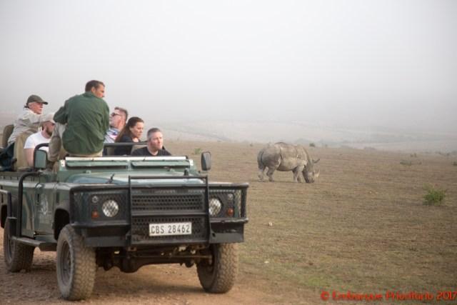 Safari na África do Sul: o Garden Route Game Lodge