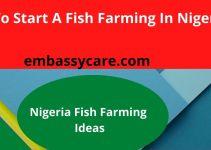 Fish Farming in Nigeria – Great Fish Farming Business Ideas For Nigeria