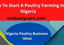 Poultry Farming In Nigeria – Make Money From Growing Poultry