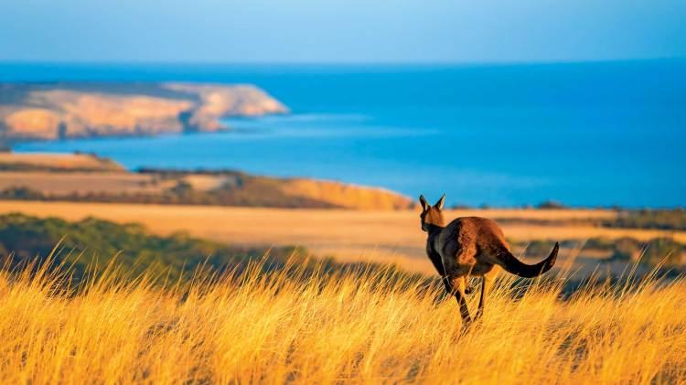 Australia Tours 2022-23 | Luxury Land Journeys - Scenic