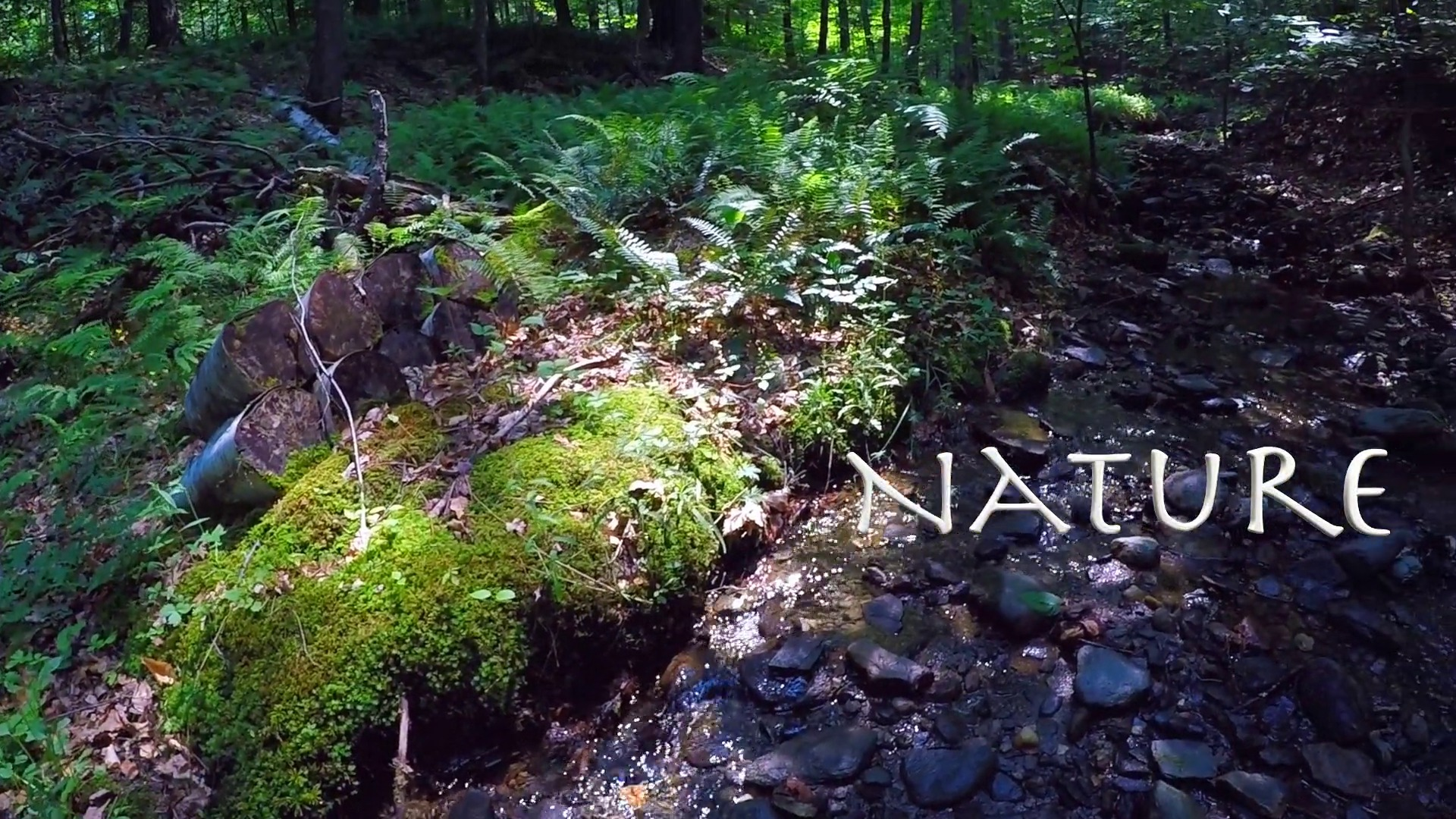 Wistia video thumbnail - Nature